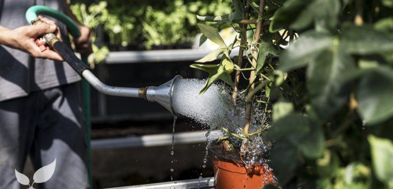 curare le piante durante le vacanze