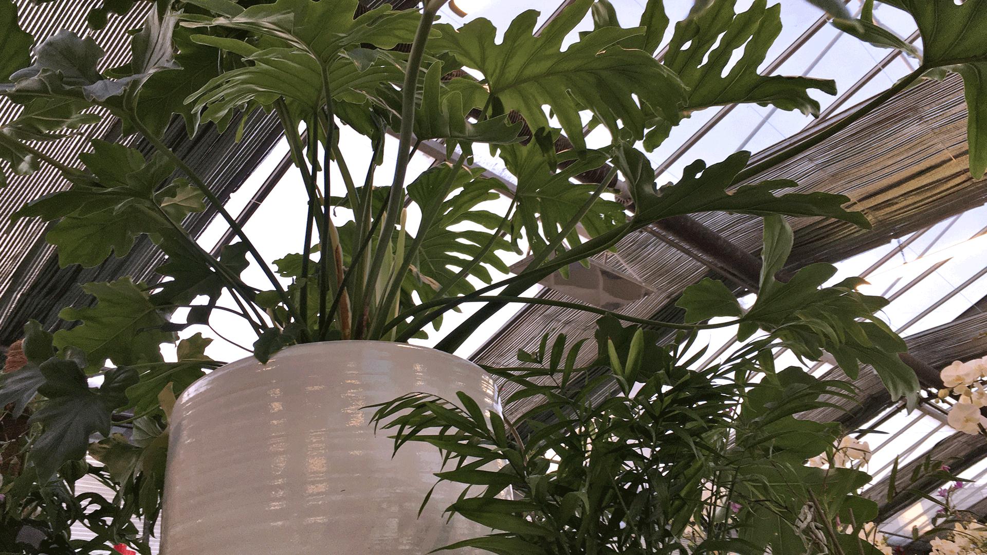 Angolo verde