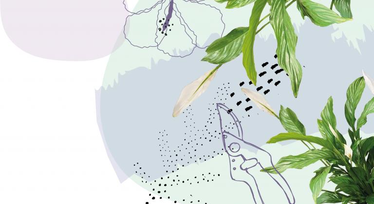 Arredare con le piante verdi in casa-Spathiphyllum