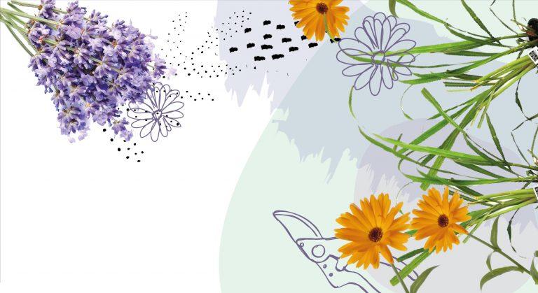 piante e fiori antizanzare