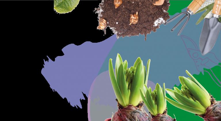 Come piantare i bulbi primaverili